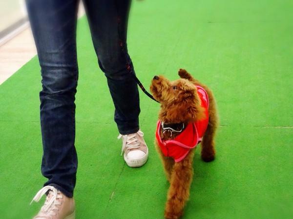 犬の芸を学ぶ