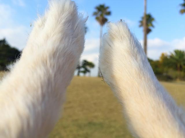 犬の前足 白い