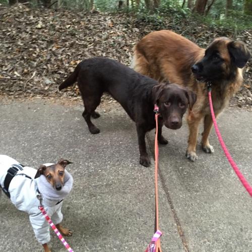 3頭の愛犬