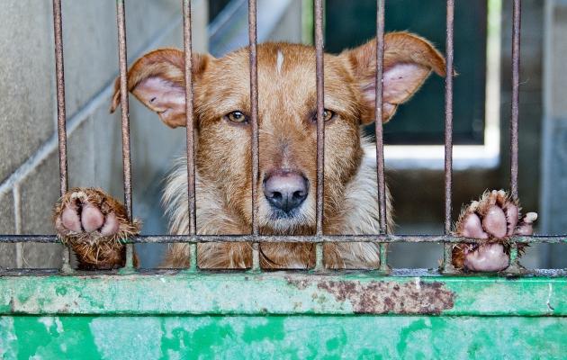 ##犬のストレス。サインと対策と予防##