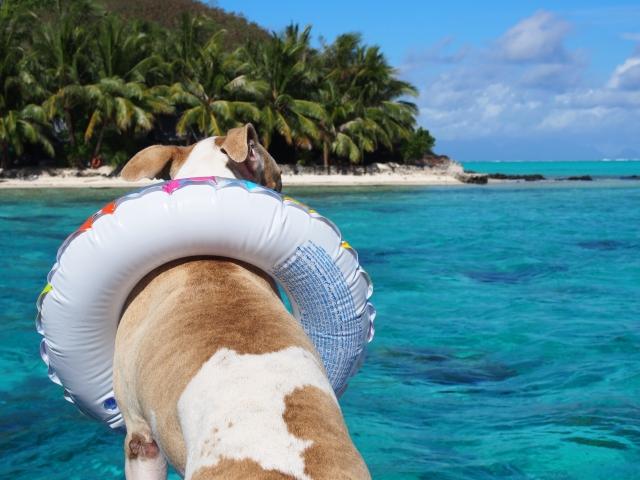 浮き輪の犬