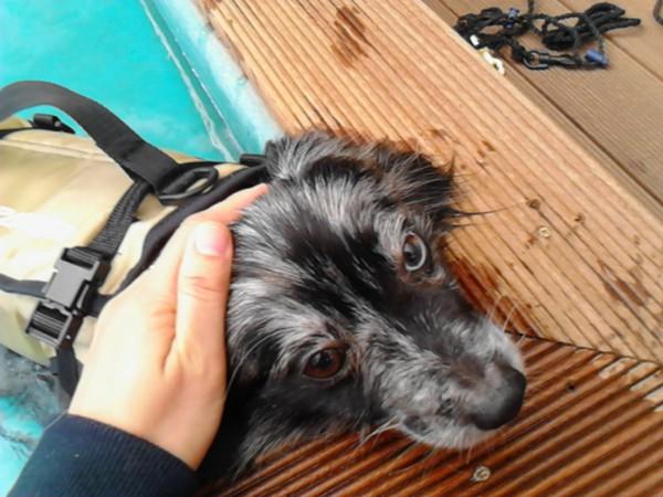 プールのヘリで撫でられている犬