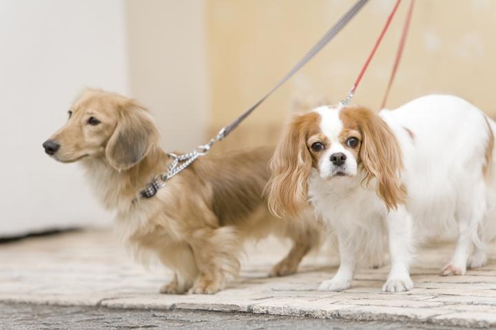 犬の散歩代行