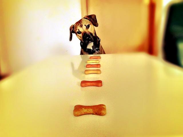骨のオヤツを見る犬