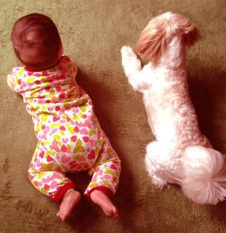 犬と子どもの後ろ姿