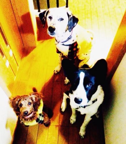 わが家の愛犬達