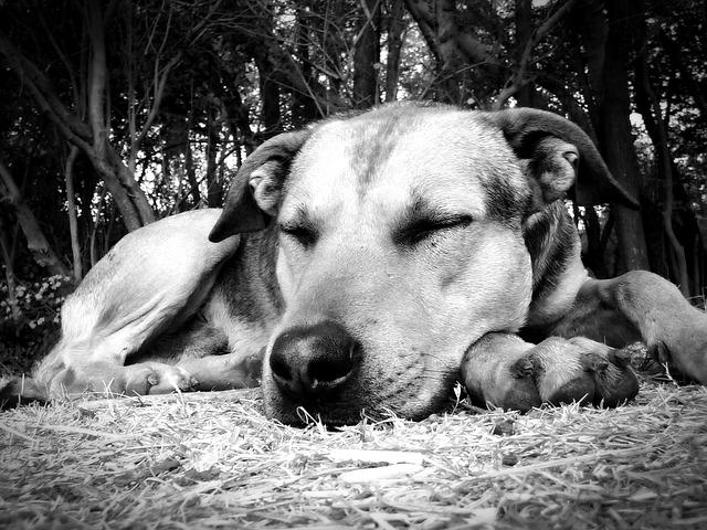 犬の夜泣き