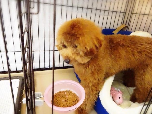 エサを食べる犬
