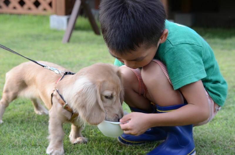 犬に食事を与える子供
