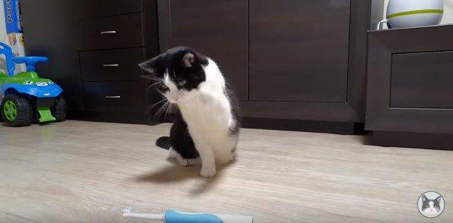 倒れた歯ブラシと猫