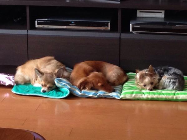 3匹で寝ている写真
