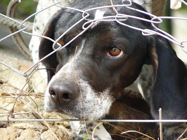 サークルの網を壊した犬