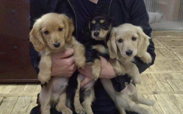 3頭の仔犬