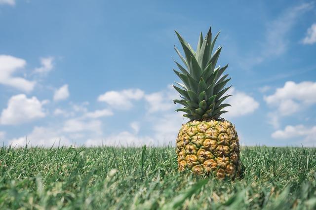 草原のパイナップル