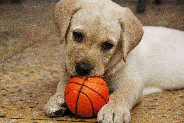 ボールを噛む子犬