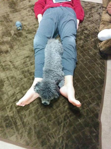 足の間で寝る犬