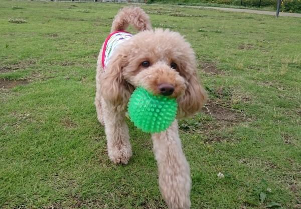 芝生でボール遊び