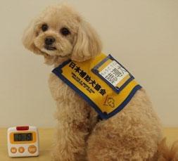 オレンジ色のケープを着用した聴導犬