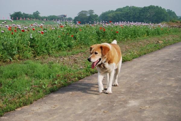 歩いている犬の写真
