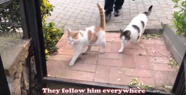 走る猫たち