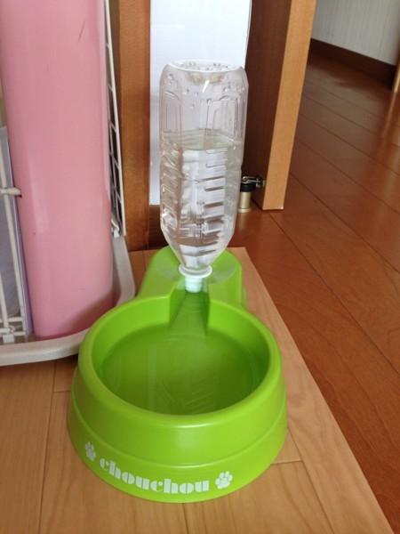 犬の飲料水