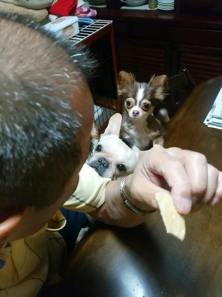 父の顔を見る2匹の愛犬
