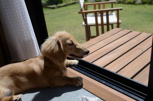窓越しに日向ぼっこする犬