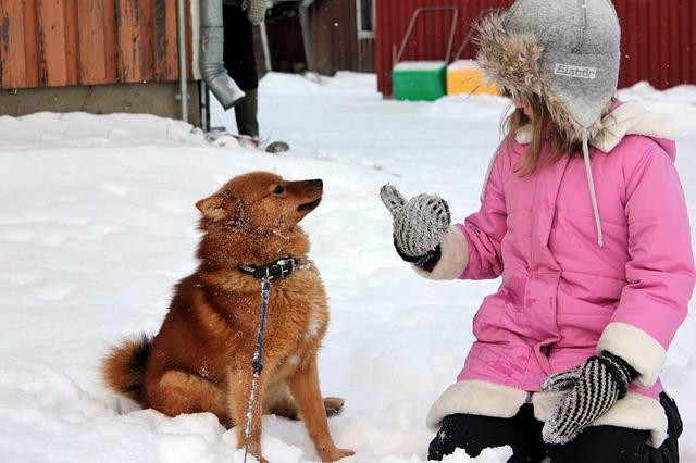 雪の上の犬