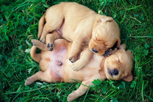 犬と草むら