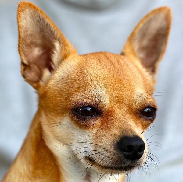 悲しい表情の犬