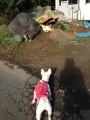 中央下に犬、岩の手前にネコ