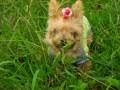草むらにいる愛犬
