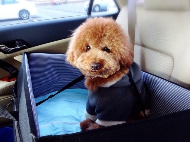 ドライブボックスに座る犬