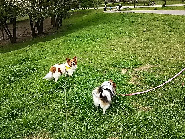 犬二人草むらにて