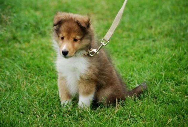 芝生に座る犬