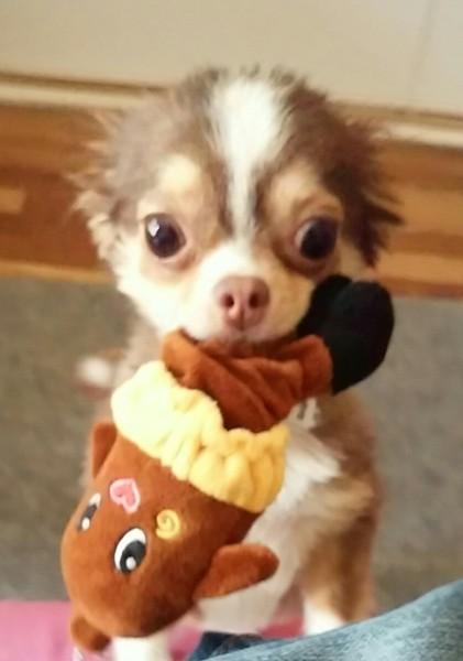 マスコットをくわえた愛犬