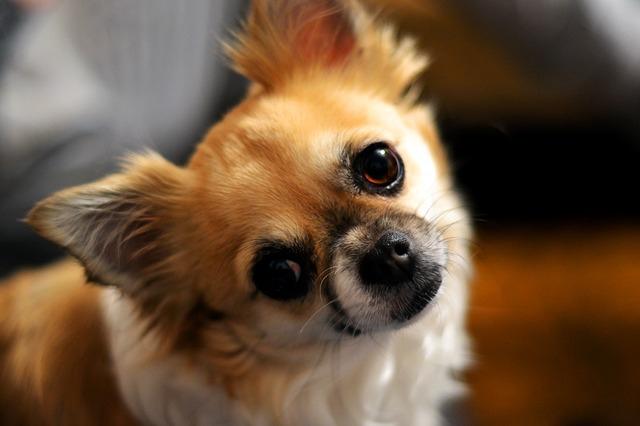 不思議な表情の犬