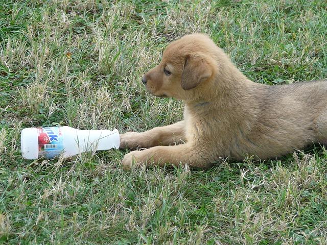 子犬とボトル