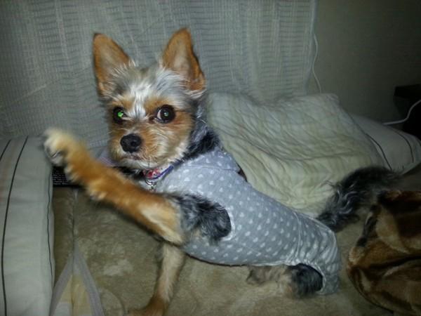 手を斜めに伸ばしているグレーの服の犬