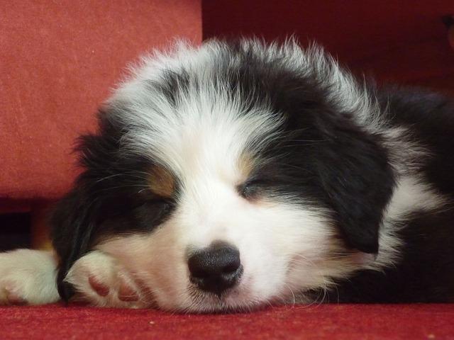気持ち良く寝る犬