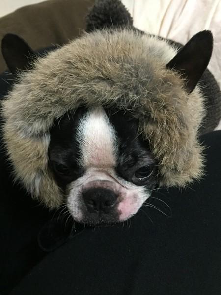 膝の上に頭を置く犬