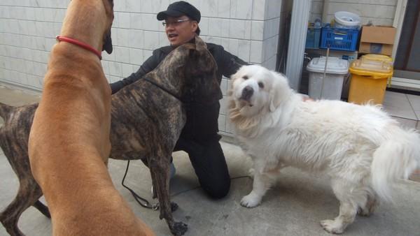 大型犬3匹とわんぱぱ