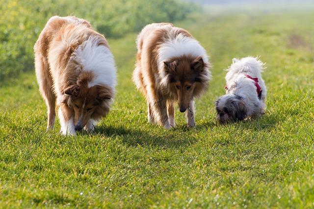 地面の臭いをかぐ犬