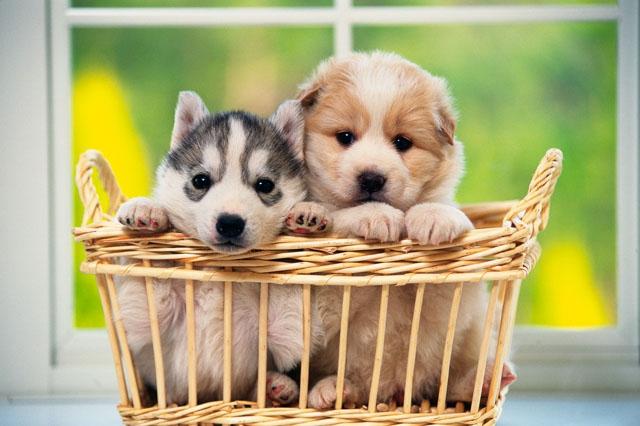 2種類の犬