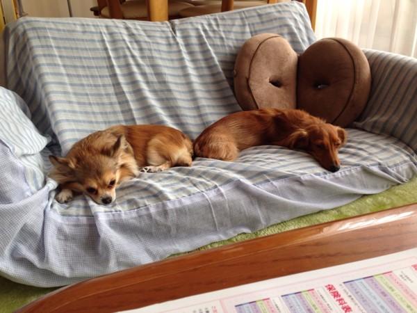 ソファーで2匹が寝ている
