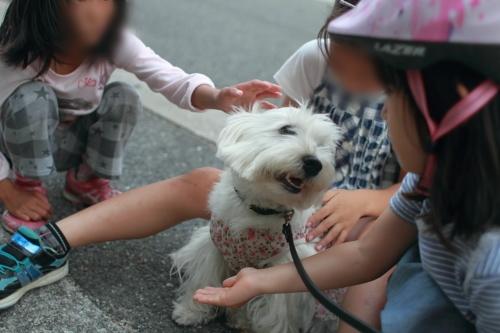 小学生女児に仲間入りしている白犬