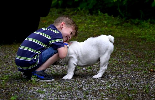 ##犬のストレスについて##