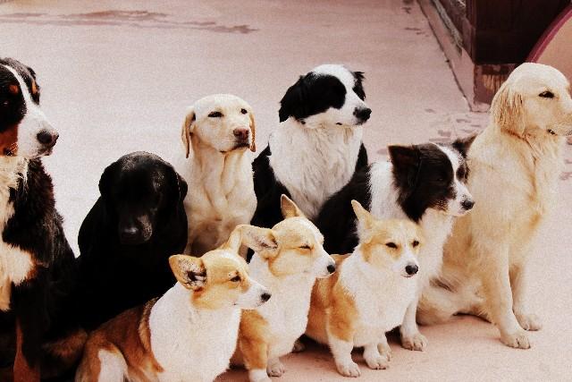 多数の犬 中型大型犬 斜めに向いている