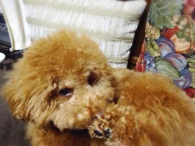 ストレスで体を舐める犬