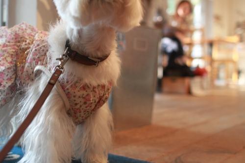白犬とカフェのお客様